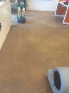 laundry karpet kantor
